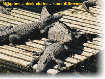 2019 themes for the year - alligators on a deck