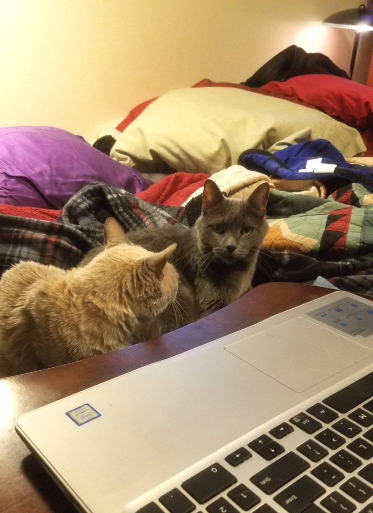 places I write - cats looking at laptop computer
