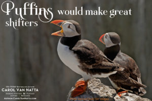 Puffins are even more delightful than flamingos