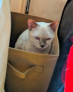 3 tips from Carol's cats. Boxes make great places for sulking.
