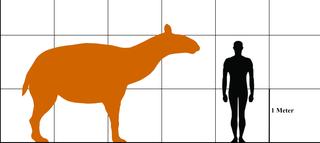 Illustration of the extinct Macrauchenia, prehistoric oddballs about the size of a modern horse