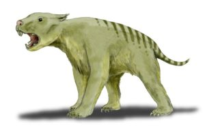 Illustration of a prehistoric marsupial lion from Australia, with teeth that could bite through bone with ease