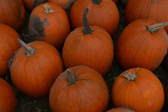 Closeup photo of pumpkins on the ground