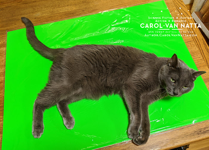Cat on the green screen